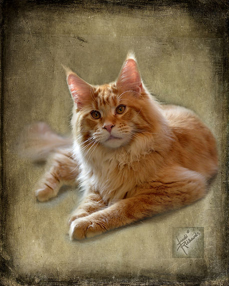 orange cat done WP 72.jpg