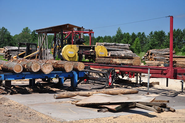 Logs are sitting on a green chain that feeds them to the sawmill for cutting.