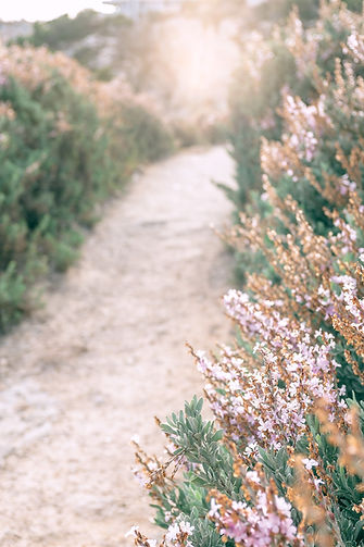 floral path.jpg