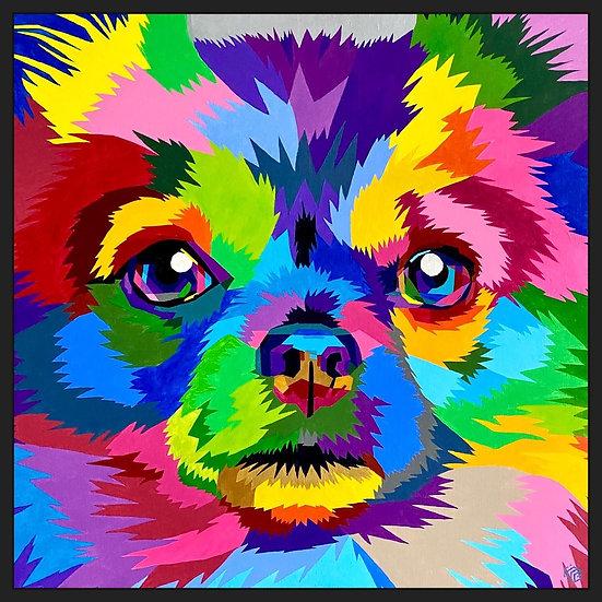Colorful Chi Chi