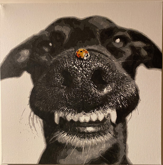 Dog with a ladybug