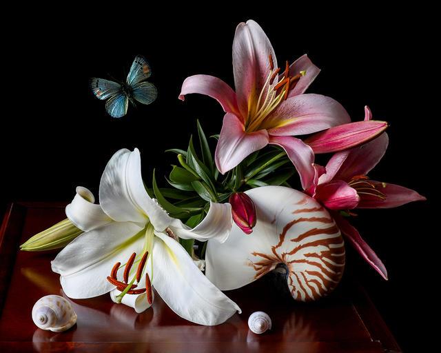 Nautilus and Lilies, photography by Yana Slutskayan