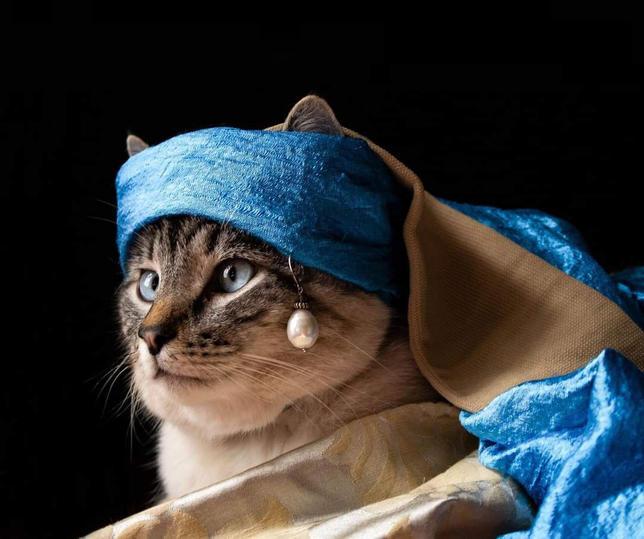 Cat with Pearl Earring, photography by Yana Slutskaya