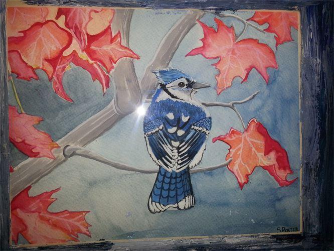 Canadian Blue Jay