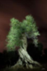 이흥렬자줏빛 하늘과 녹색 올리브나무.jpg