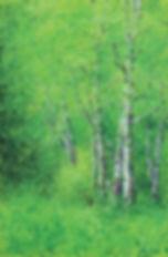 8월의 숲 │ Mxied Media │ 90.9 x 65.1㎝.jpg