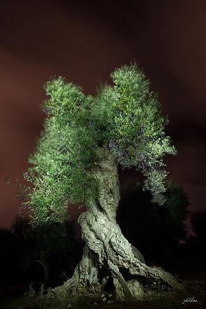 자줏빛 하늘과 녹색 올리브나무