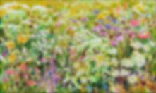 염순영 110x65 풀꽃도 꽃이다watercolor 2019.jpg