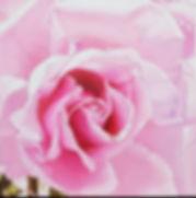 임선옥 pleasure2, 20x20cm, oil on canvas.jp