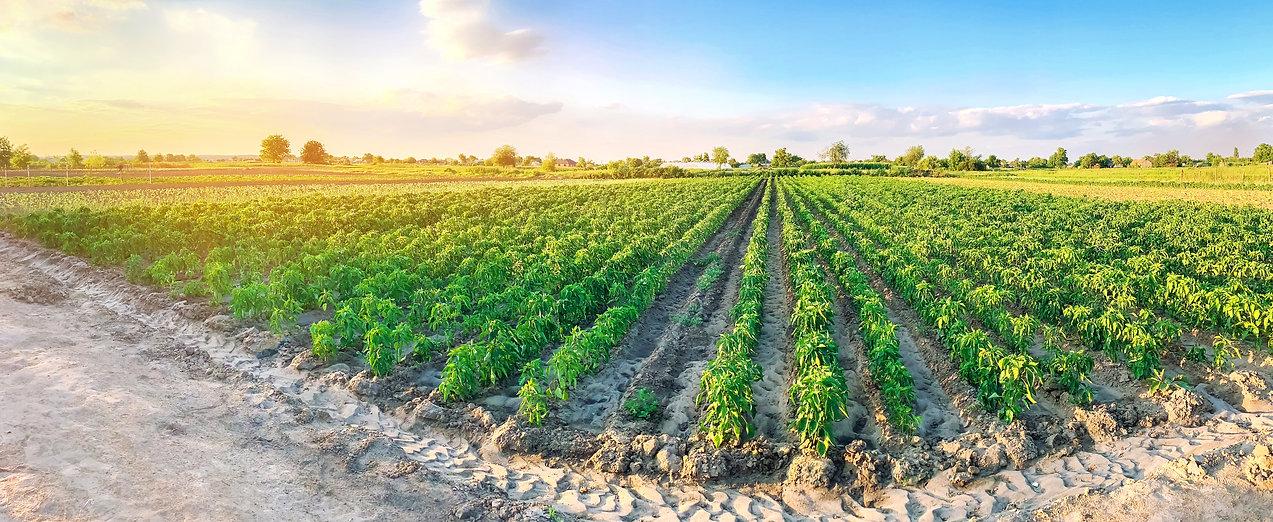 agriculture-77RHKKA.jpg