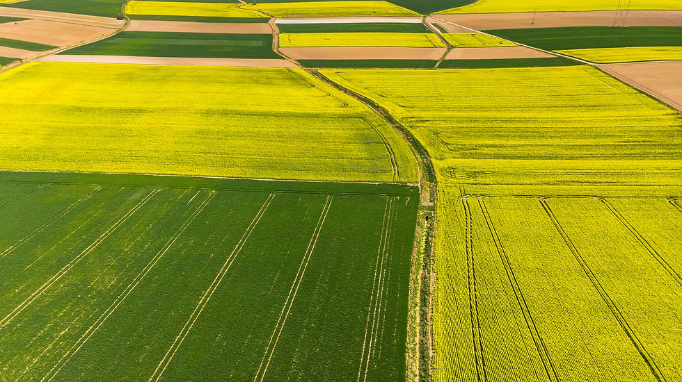 colorful-agricultural-fields-at-spring-a