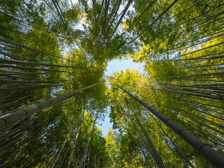 JPMorgan Chase Adopts Deforestation Policies
