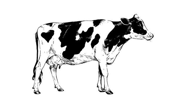 Vache Laitiere.jpg