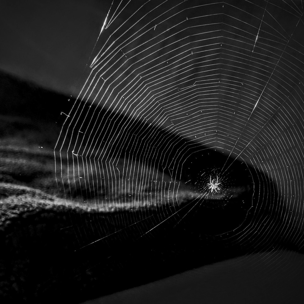 A Spider and It's Web