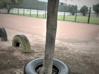 タイヤがはまった木・・・