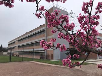 桜がほぼ満開になりました