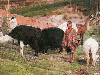 社会科資料集 コノスカモス・ペルーをアップします