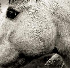 Bonny Light Horseman Album Packshot.png