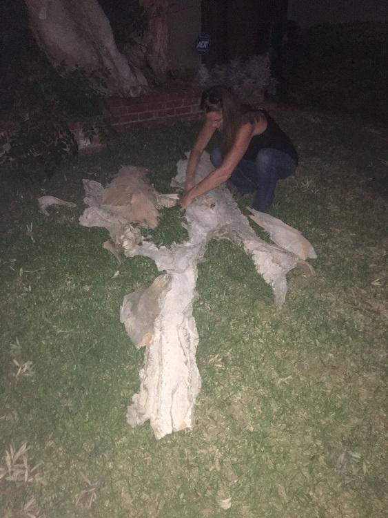 Giving Treeeeee