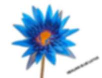 Healing Blue Lotus Flower