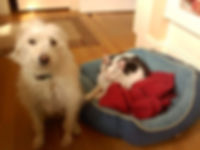 Pet Sitting for Dogs and Cats!