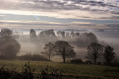 Misty Morning David Le Tall.jpg