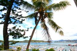 élagage arbre cocotier
