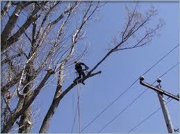 Élagage de vos arbres pour sécuriser vos lignes électriques en Nouvelle-Calédonie