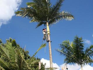Élagage des arbres en saison fraîche