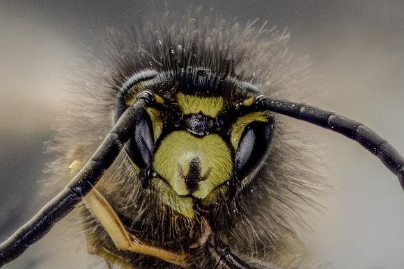 Wasp Portrait 800DPI Gloss Print