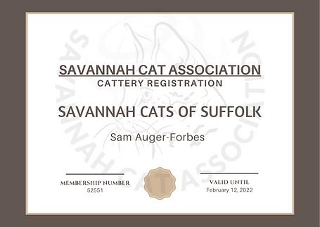 savannah cat association.png