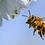 Thumbnail: Sponsor a SAAF Bees Beehive