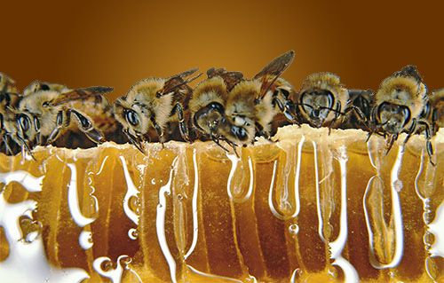 Natural Honey Direct From SAAF Bees