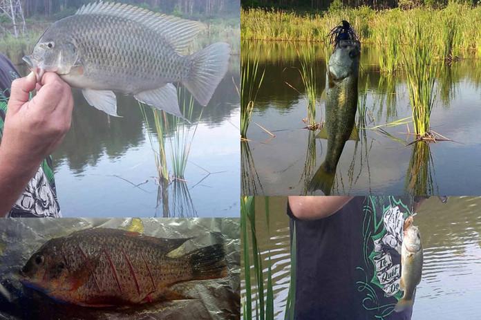 Fish from the dam-w1400.jpg