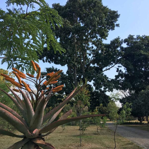 ilanda - Driveway Aloe Winter - IMG_0643