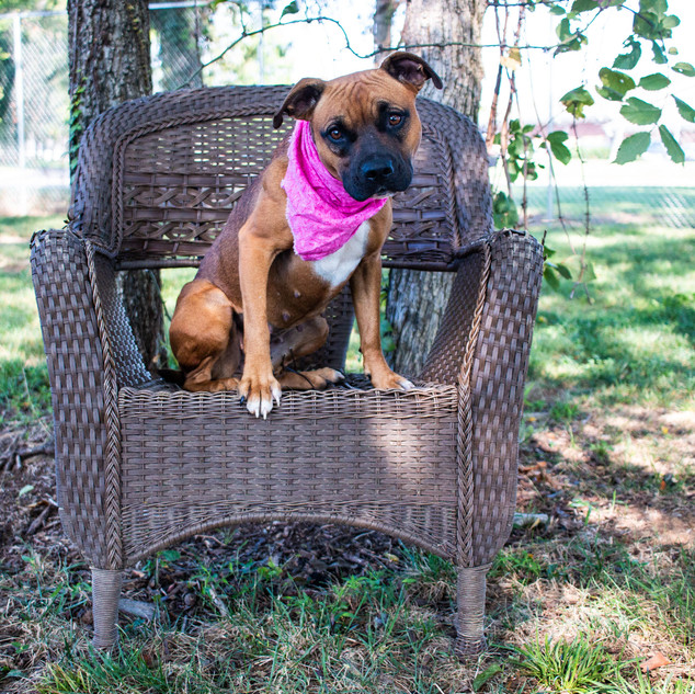 Rutherford County PAWS