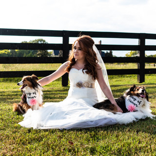 Belle-Meadows-Farm-Fall-Wedding-Dogs