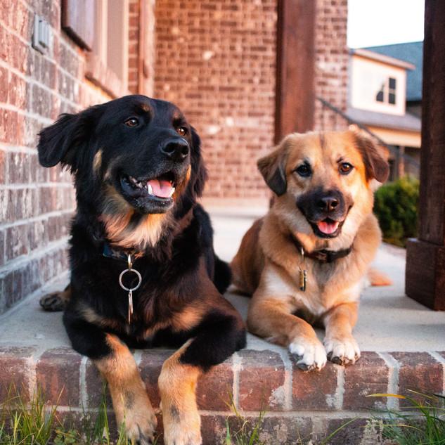 Gunner & Mila Howl-o-ween-36.jpg