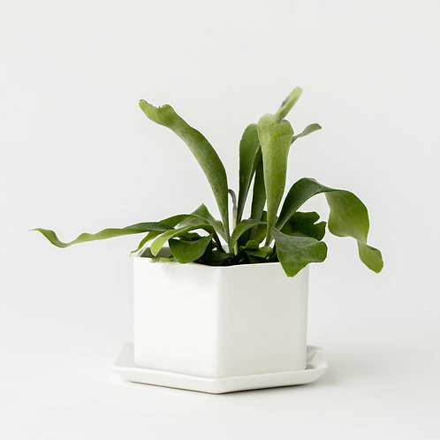 Convivial White Hexagon Planter