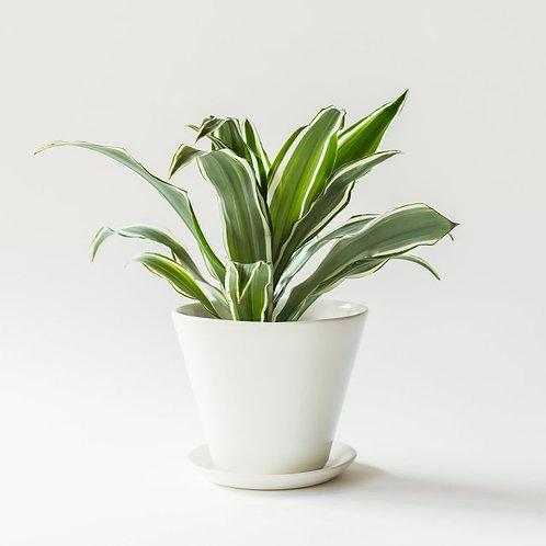 Convivial Minimal Planter