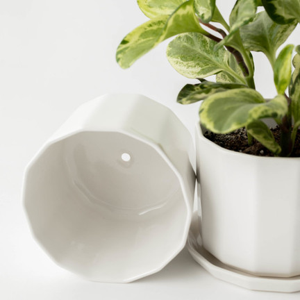 Riveted Planter 5 inch - with plant clos