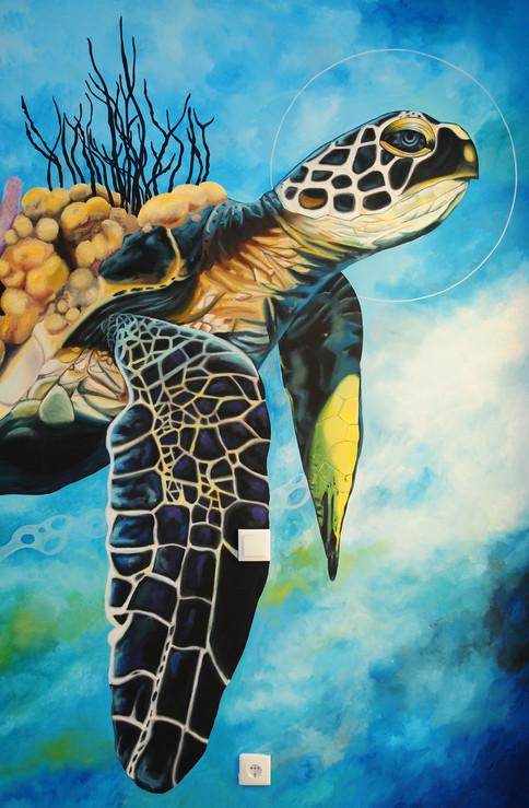 turtledetail.jpg