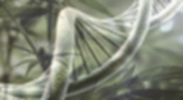 ADN%20cannabis_edited.jpg