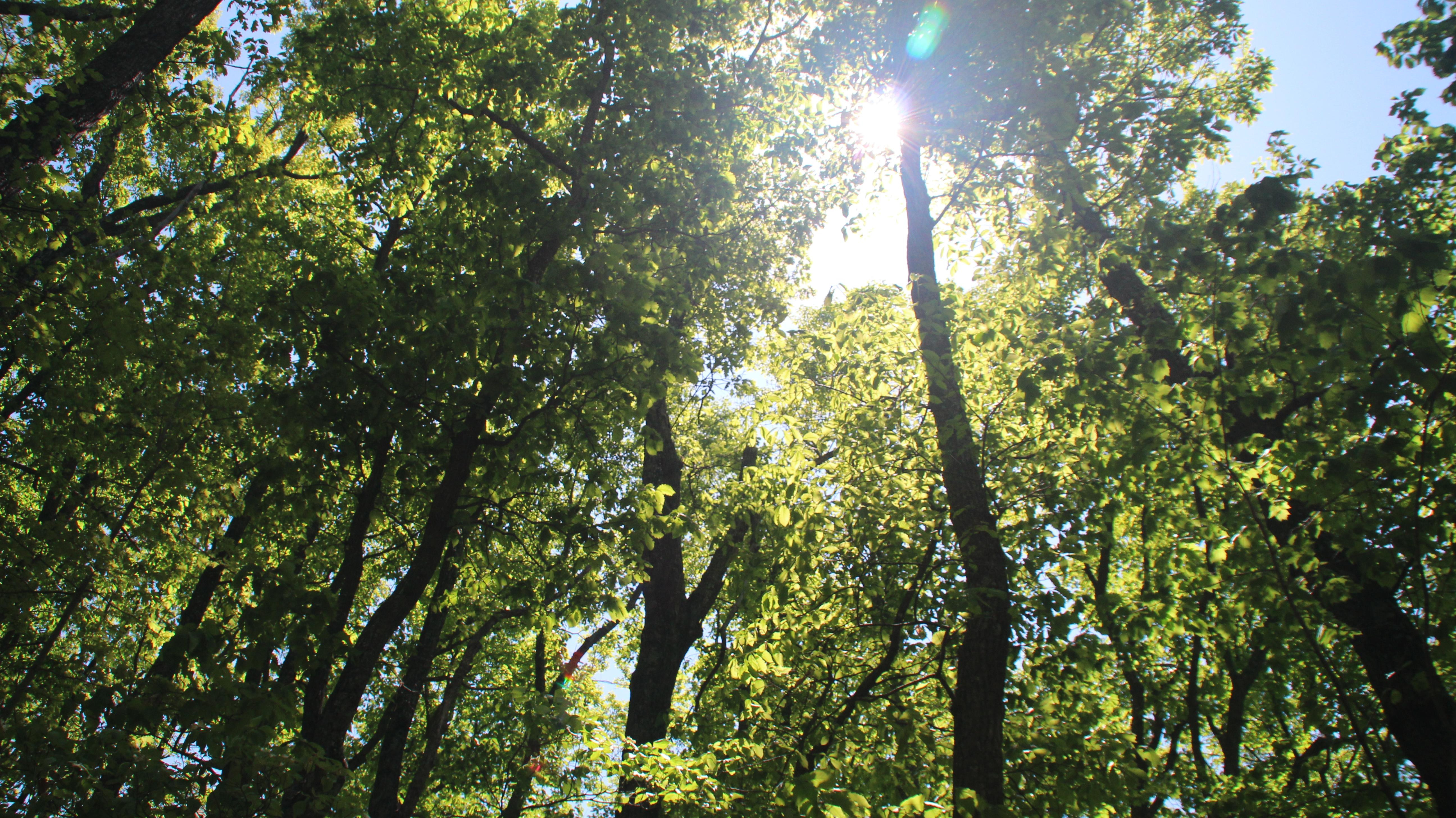 Sunlit Walk