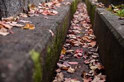 境内の落ち葉も秋の風景