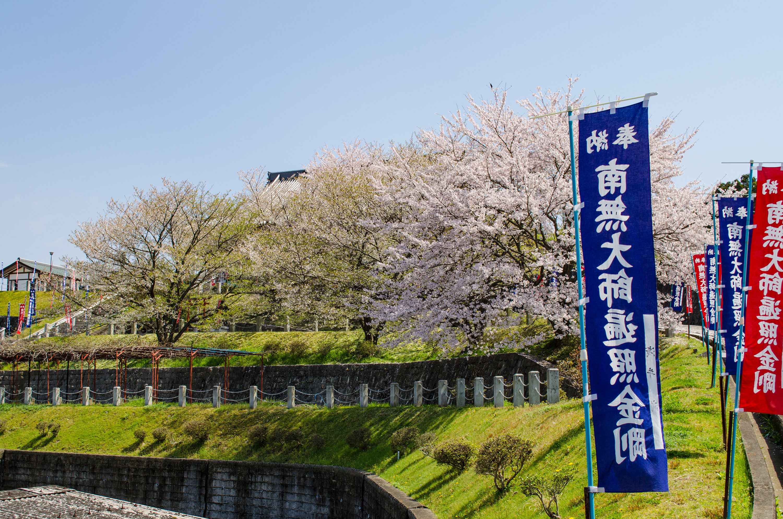 春になると境内は満開の桜で彩られます。