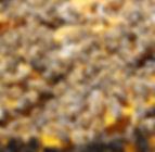 bees-486872_1920.jpg