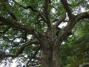 tree-893273_1920.jpg