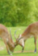 animals-3657861_1920.jpg
