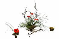 flower-4644654_1920.jpg